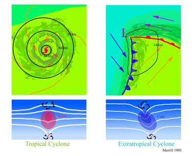 The top schematics show horizontal maps of the surface temperature and wind fields associated with a tropical cyclone (left) and an extratropical cyclone (right). Colors indicate temperature (blue: 15°C=59°F, blue-green: 20°C=68°F, green: 25°C=77°F). Solid lines indicate surface wind speeds (34 kt=39 mph and 64 kt=74 mph). The bottom schematics show vertical maps of the pressure surfaces and circulation at the surface and tropopause.