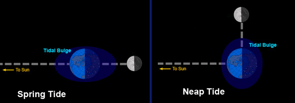 Illustration of the Earth, Moon, and Sun relative locations for spring and neap tides.